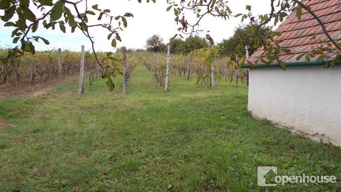 9. kép | Eladó Zárt kert, Vásárosmiske (#108916)