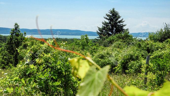 1. kép | Eladó balatoni panorámás  telek, szőlő Balatonudvari | Eladó Zárt kert, Balatonudvari (#130410)