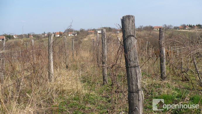 10. kép   Eladó Zárt kert, Nyőgér (#117521)