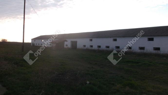 0. kép   Eladó Mezőgazdasági, Kaszaper (#145448)