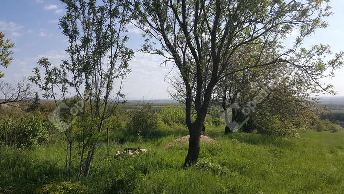 13. kép | Eladó Zárt kert, Csákvár (#129738)