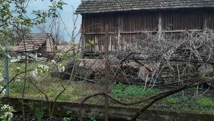 13. kép   Udvar   Eladó Családi ház, Lőkösháza (#151193)