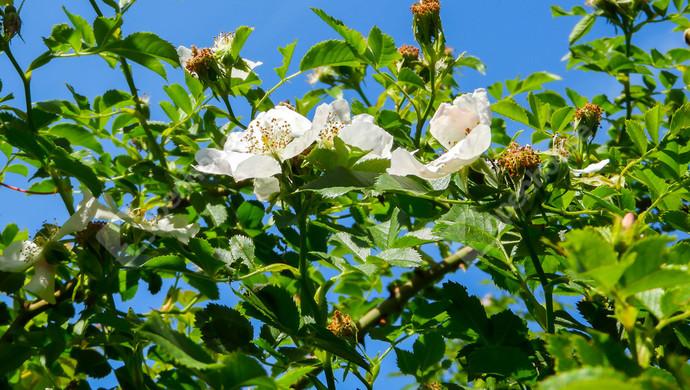 5. kép | Eladó balatoni panorámás  telek, szőlő Balatonudvari | Eladó Zárt kert, Balatonudvari (#130410)
