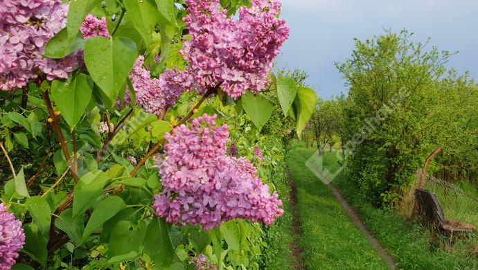 3. kép | Eladó Zárt kert, Miskolc (#129813)