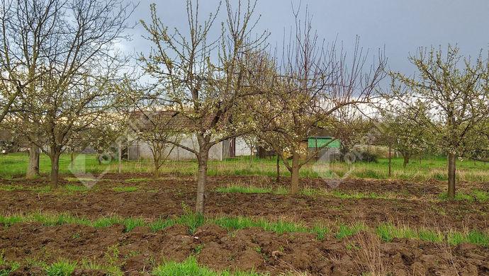 8. kép | Eladó Zárt kert, Nagykörű (#150976)