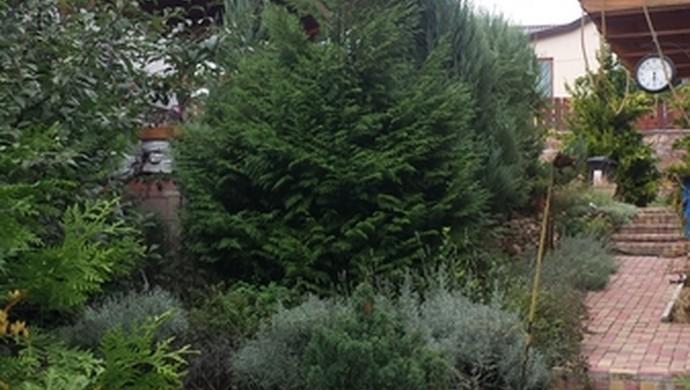 14. kép | Kijárat a kertbe | Eladó Családi ház, Tata (#99072)
