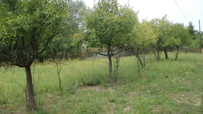 6. kép   Eladó Zárt kert, Tápiószentmárton (#107310)