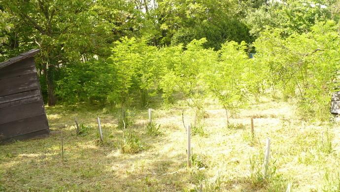 2. kép   Eladó Zárt kert, Borgáta (#100824)