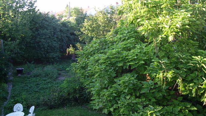 12. kép | Jászberény családi ház udvar | Eladó Családi ház, Jászberény (#79244)