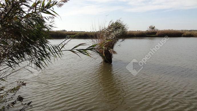 6. kép | Eladó Mezőgazdasági, Balatonszentgyörgy (#143074)