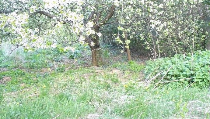 4. kép | Eladó Zárt kert, Kőszeg (#100398)