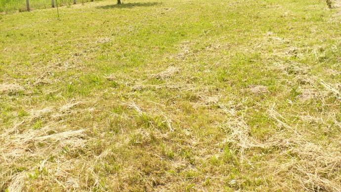 1. kép   Eladó Zárt kert, Borgáta (#100824)