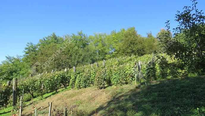 4. kép | Eladó Zárt kert, Tornyiszentmiklós (#142073)