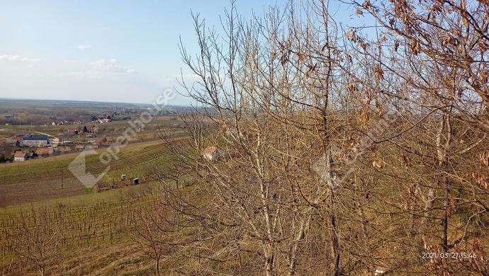 29. kép | Eladó Kúria, Somlószőlős (#150789)