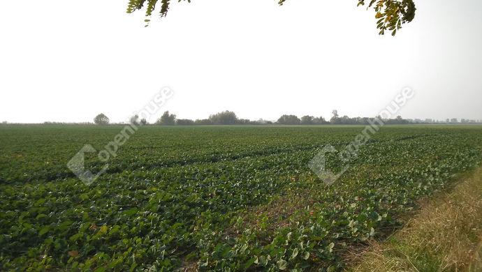 0. kép | A KÉP ILLUSZTRÁCIÓ! | Eladó Mezőgazdasági, Celldömölk (#130537)