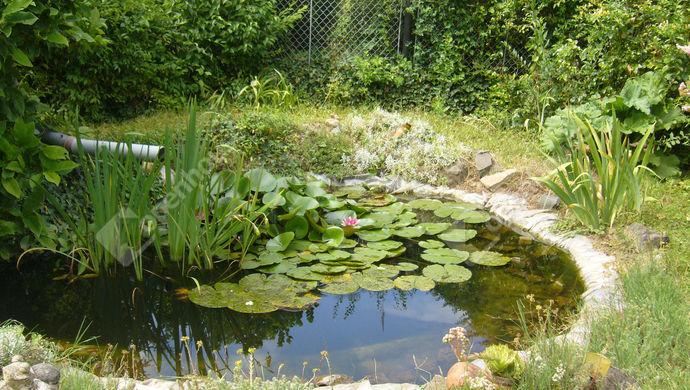 29. kép   Kerti tó   Eladó Családi ház, Zalaszentgrót (#140307)