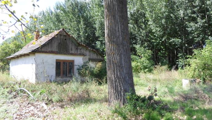 0. kép | Jászszentandrás. Tanya | Eladó Zárt kert, Jászszentandrás (#90543)