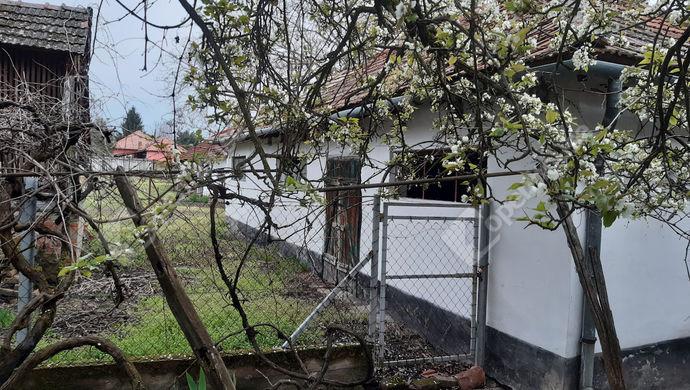 12. kép   Melléképületek   Eladó Családi ház, Lőkösháza (#151193)