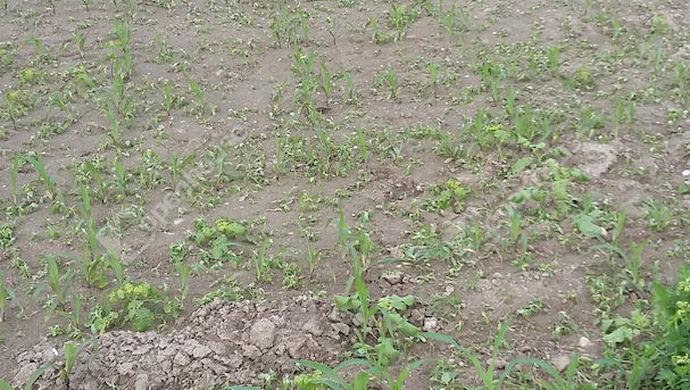 1. kép | Eladó Mezőgazdasági, Rajka (#139483)