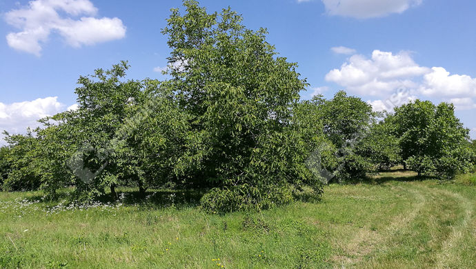 3. kép | Eladó Mezőgazdasági, Sopron (#134800)