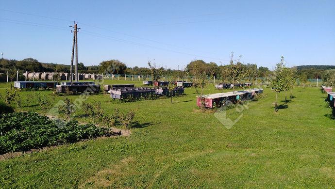 7. kép | Eladó Mezőgazdasági, Salomvár (#141908)