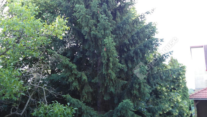 31. kép | Emlékezetes fa az udvarban | Eladó Családi ház, Tata (#139490)
