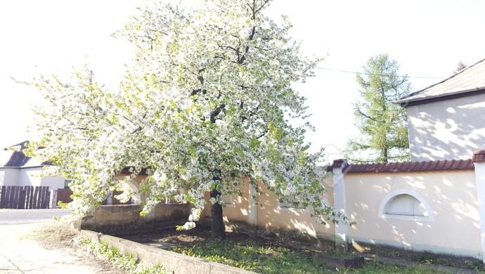 12. kép | Eladó Családi ház, Tatabánya (#129733)
