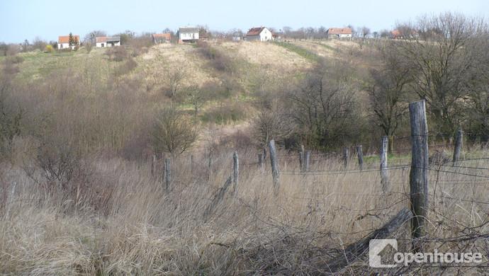 8. kép   Szőlő   Eladó Zárt kert, Nyőgér (#117521)
