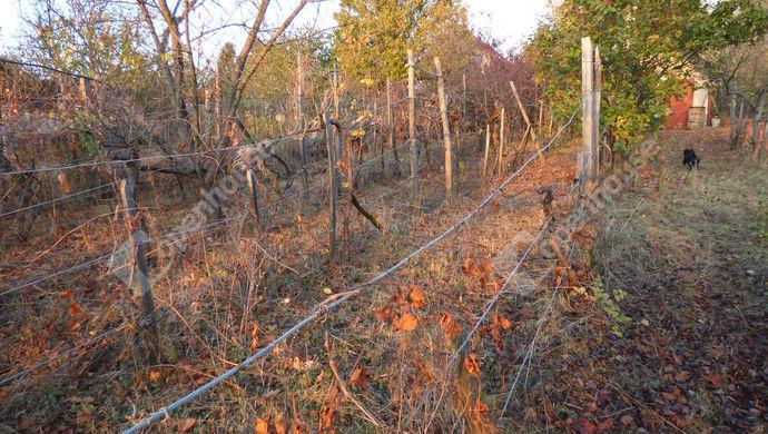 3. kép | Eladó Zárt kert, Páty (#142938)