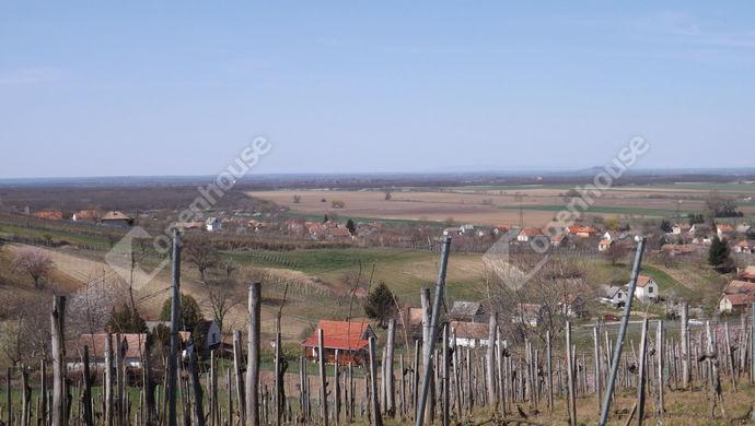 34. kép | Eladó Kúria, Somlószőlős (#150789)
