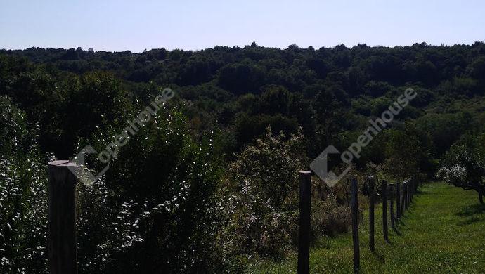2. kép | Telekhatár és a birtok nyugati irányban | Eladó Zárt kert, Salomvár (#141906)