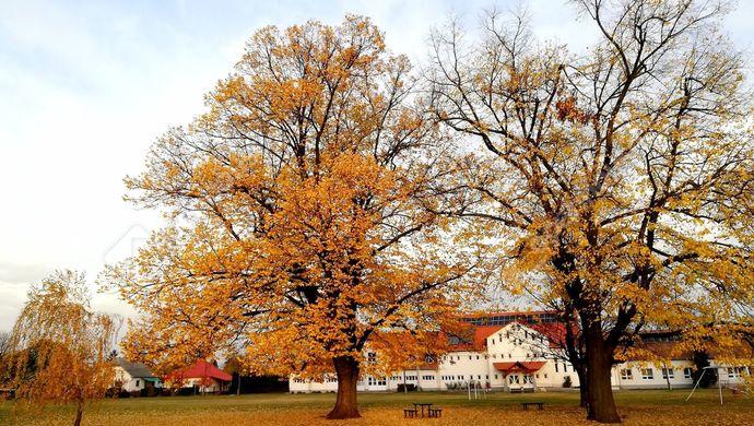 12. kép | Eladó Családi ház, Hernádkak (#134763)