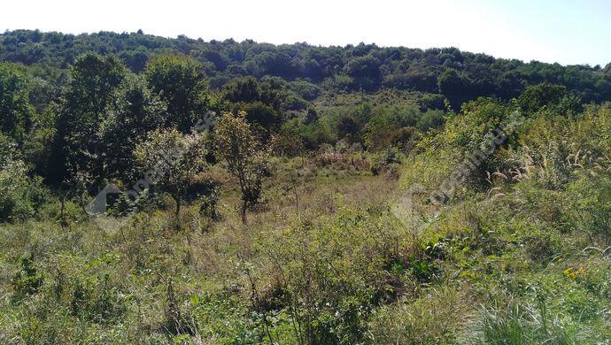 7. kép | Birtok Keletről nyugati irányba nézve | Eladó Zárt kert, Salomvár (#141906)