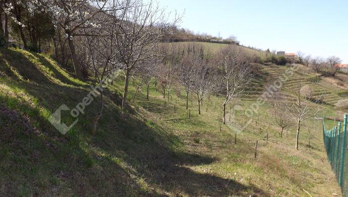 33. kép | Eladó Kúria, Somlószőlős (#150789)