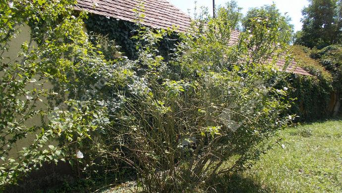 1. kép | Eladó Családi ház, Borgáta (#140530)