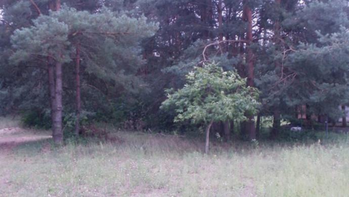 4. kép   Eladó Zárt kert, Tápiószentmárton (#107310)