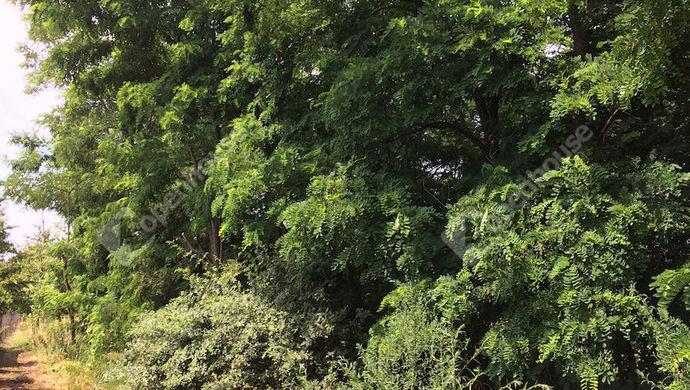 6. kép | Eladó Zárt kert, Tata (#140391)