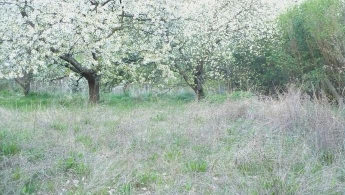 2. kép | Eladó Zárt kert, Kőszeg (#100398)