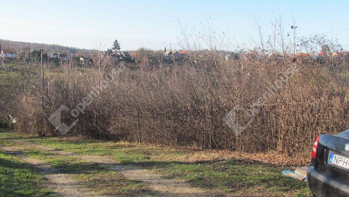 3. kép | Telek déli oldala | Eladó Telek, Zalaegerszeg (#135795)