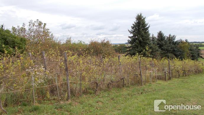 19. kép | Eladó Zárt kert, Vásárosmiske (#108916)