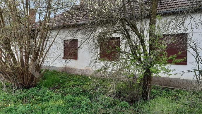 6. kép   Utcai homlokzat   Eladó Családi ház, Lőkösháza (#151193)
