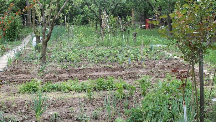 5. kép | Eladó Mezőgazdasági, Szombathely (#138777)