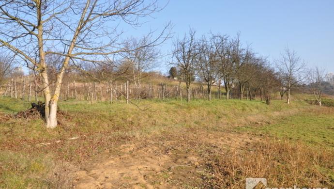 7. kép | Eladó Zárt kert, Zalaegerszeg (#69558)