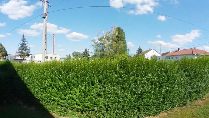 1. kép   Eladó Családi ház, Zalaegerszeg (#132932)