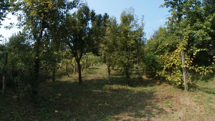 0. kép | Eladó Zárt kert, Miskolc (#133092)