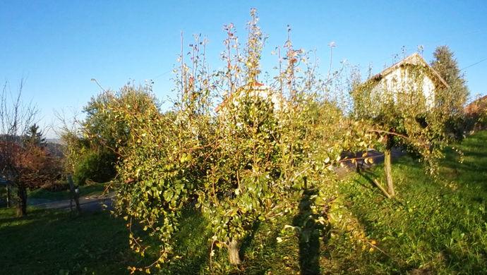 1. kép | Eladó Zárt kert, Zalaegerszeg (#142388)